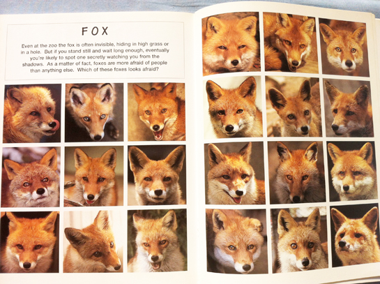 animal_faces_satoh_toda_foxes