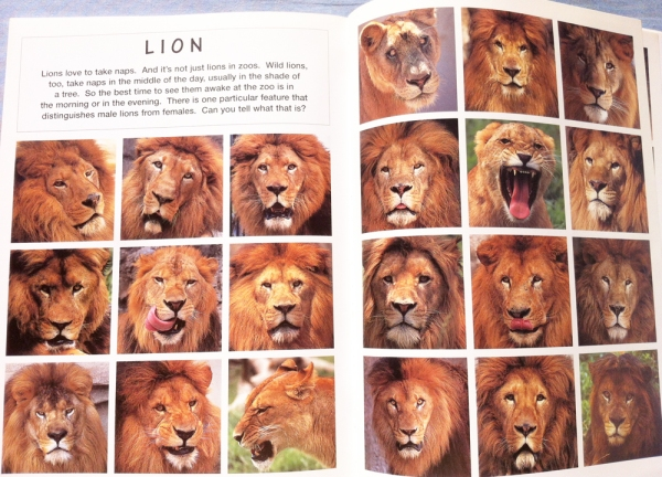 animal_faces_satoh_toda_lions