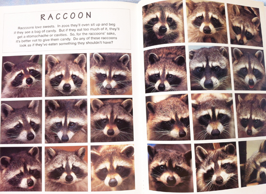 animal_faces_satoh_toda_raccoons