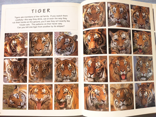 animal_faces_satoh_toda_tigers