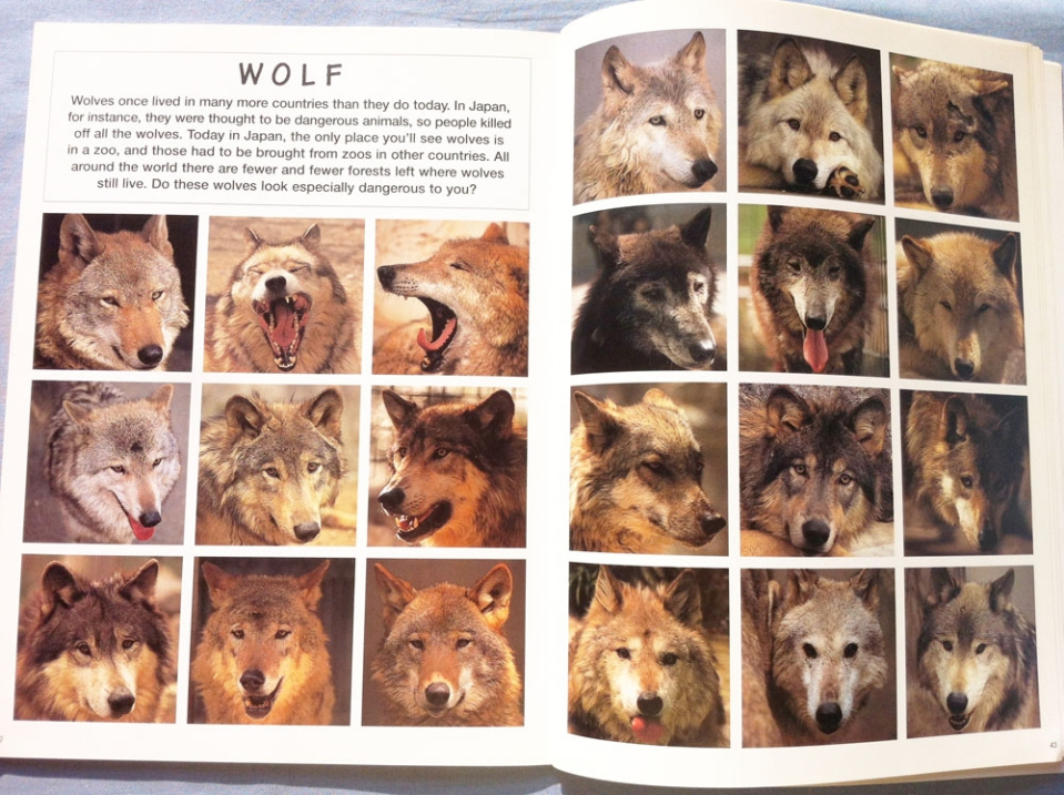 animal_faces_satoh_toda_wolves